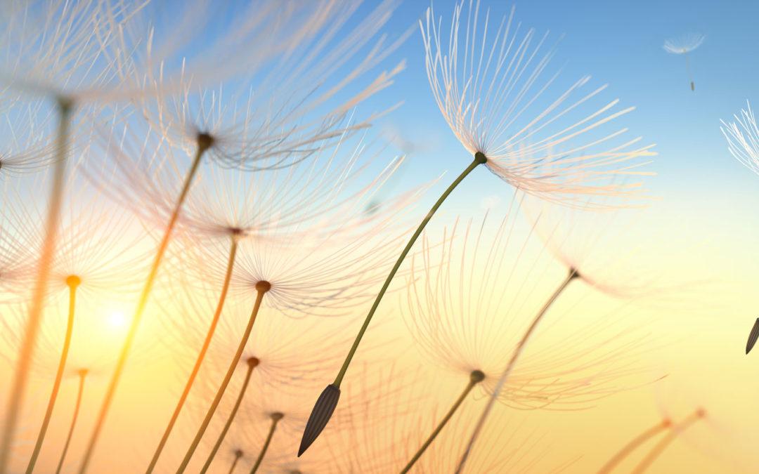 Soulful Living – Dein monatlicher Seelenbalsam